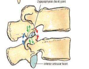 Lumbar Facet Joints