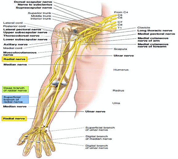 Different Types of Neck Pain